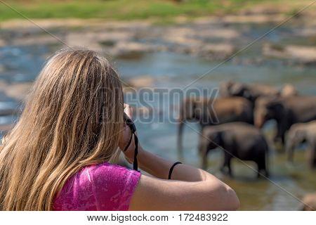 Cute young female wildlife photographer during safari making photos of elephants