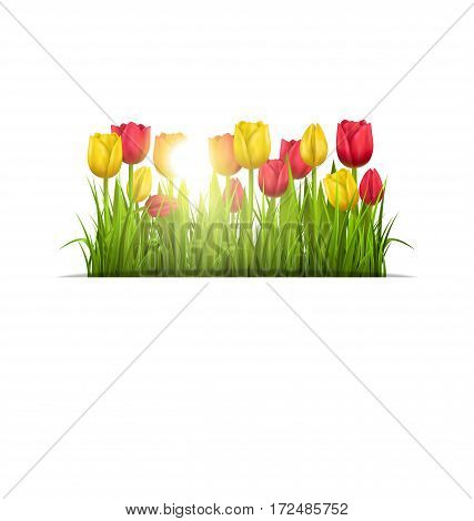 Green grass lawn with yellow and red tulips and sunlight isolated on white. Floral nature flower background