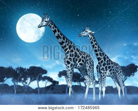 Two giraffes on the savannah in night.
