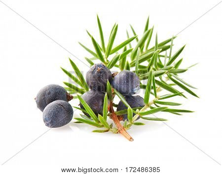 Juniper with leaves oj a white background