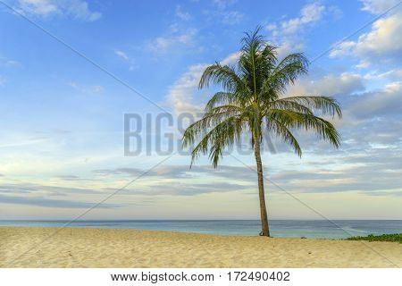 tropical beach with coconut palm tree in Thailand