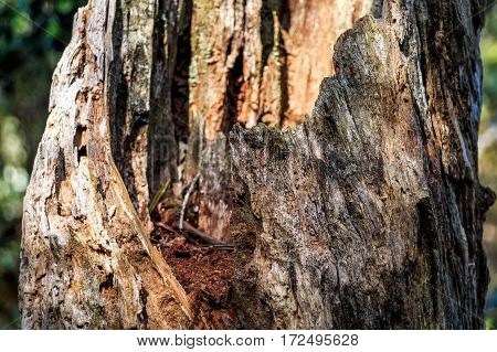 Close-up wooden texture of old tree trunk with rot