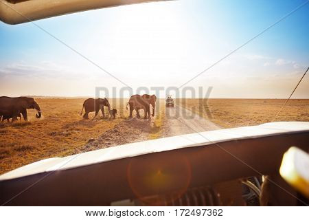 Tourist in safari jeep watching elephant's family crossing road in Amboseli national park, Kenya