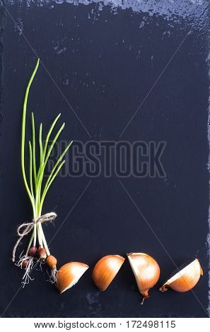 green onion on black background. shallots still life black background onion bulb season herb vegetable ingredient