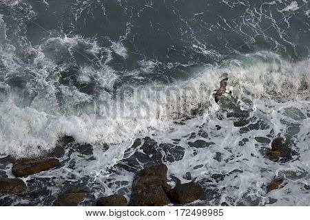 Crimea. Black Sea. Spray from a breaking wave.