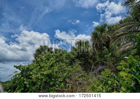 tropical jungle and blue sky during summer