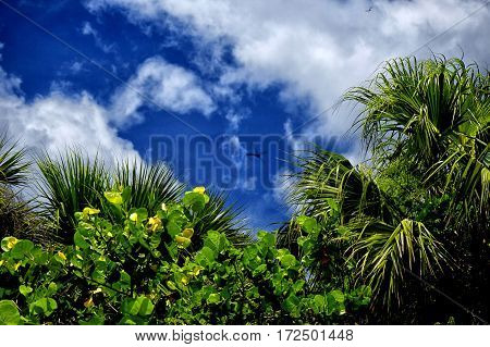 Summer vacation in the tropical jungles of Florida