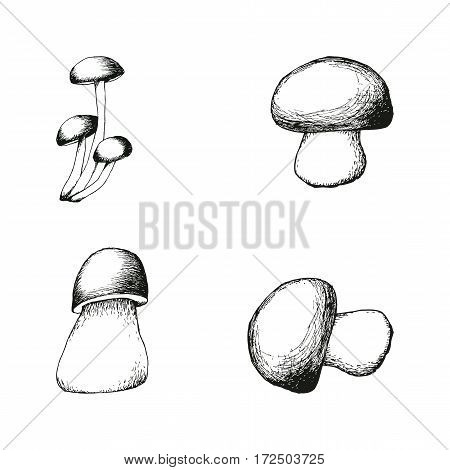 Set of four hand drawn mushrooms. Vector black and white doodle sketchy illustration. Boletus, chanterelle, agaric and russala.