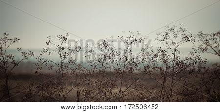 Wild Flower Closeup In Winter. Panoramic View.