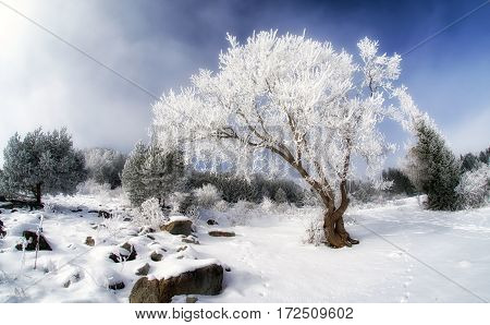 Frost on tree and snowy land. Fisheye lens photography