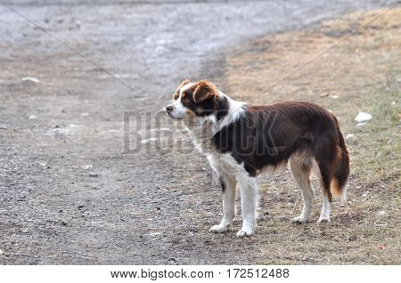 Portrait of a dog who looks pensively to the side, dog in the park