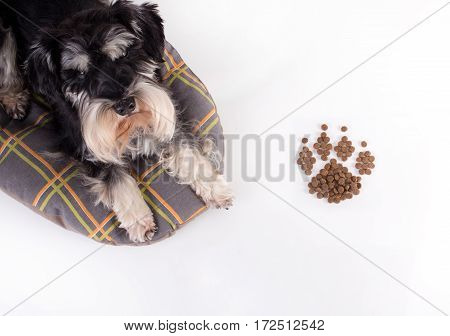 Dog Beside Paw Shaped Granules