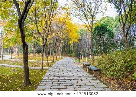 empty paving stone walkway in a park of China.