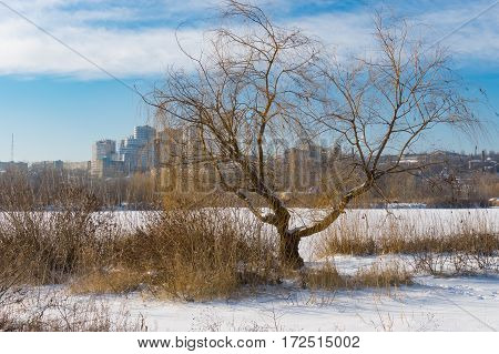 Winter landscape with willow tree near frozen river and view on a downtown in Dnepr city Ukraine