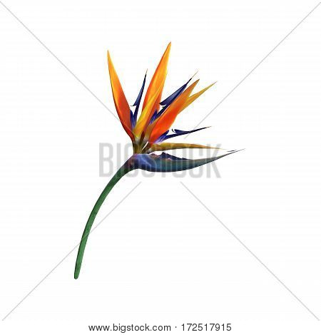 3D rendering of a strelitzia or bird of paradise flower isolated on white background