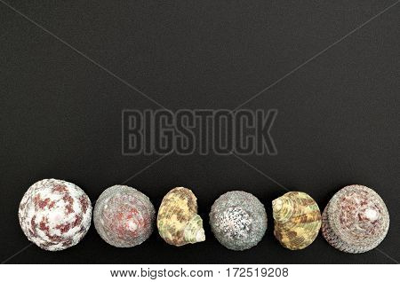 Sea shells on on a black background with free space for text. Top view