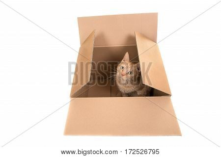 Red cat sitting in a carton box looking up facing the camera seen from above isolated on a white background