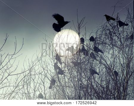 Surreal, gothic, mysterious background. Flock of birds