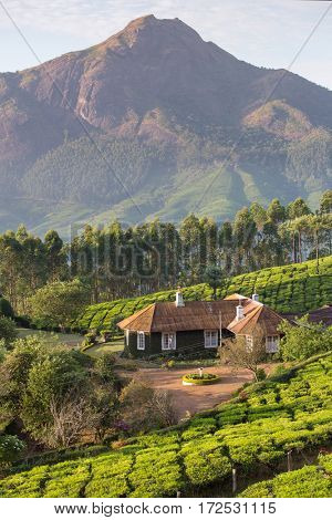 House in the middle of tea plantations in Munnar, Kerala,  India