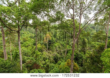 Lush green tropical rainforest