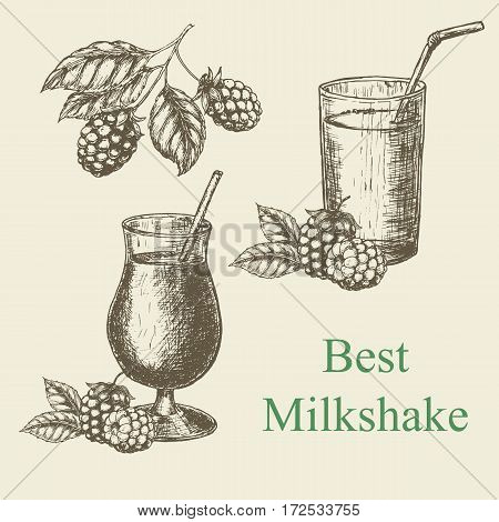 Hand drawn milkshake and blackberry raspberry. Vector illustration
