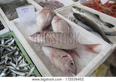 Exotic sea fish from Adriatic sea in Montenegro.