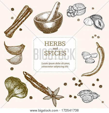 Spices Set and Mortar with Pestle Banner Card Hand Draw Sketch. Vector illustration