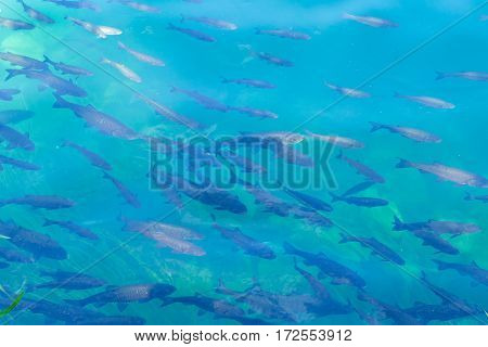 school of fish in bright blue river abstract background texture