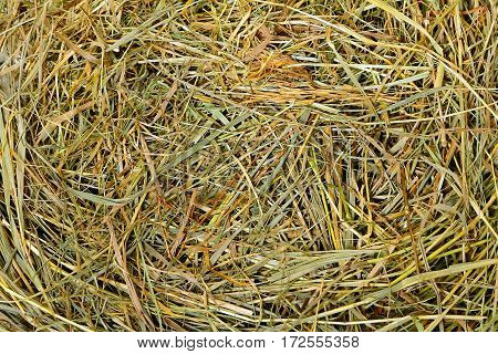 Close-up shot of hay as farm background