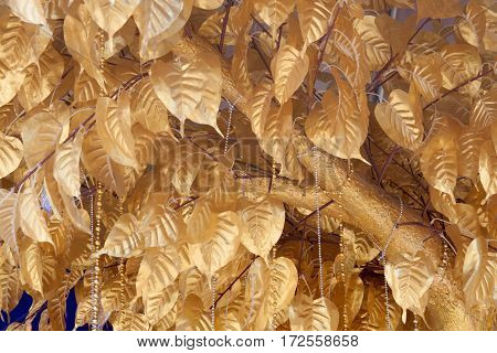 The background of the bodhi golden leaves