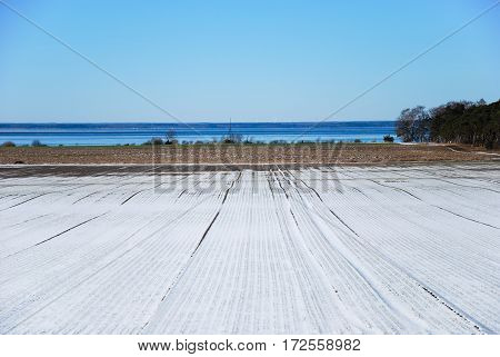 Early springtime pattern in a farmers field at the swedish island Oland