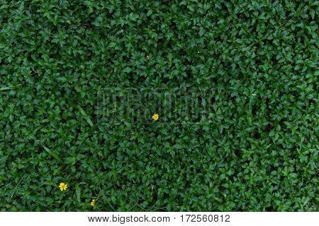 Moist Green Grass Field In Forest Texture