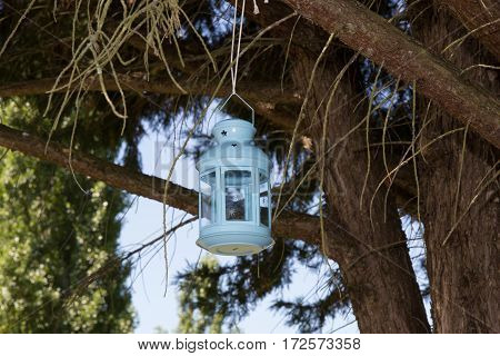 Vintage And Old Blue Lantern Hanging In A Tree In The Garden