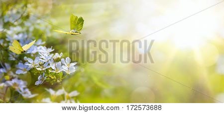 Easter spring flower background; fresh flower and yellow butterfly on green background