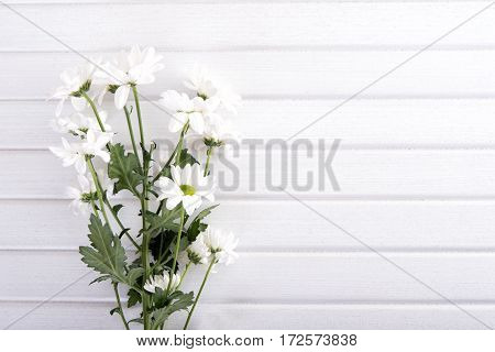 Branch of white chrysanthemum on white wooden table