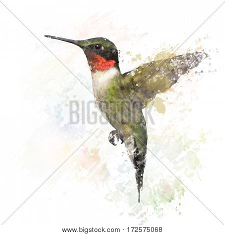 Digital Painting of  Ruby Throated Hummingbird