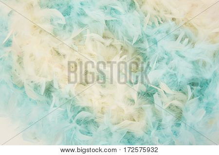 Soft blue and yellow feathers from a boa in a total frame