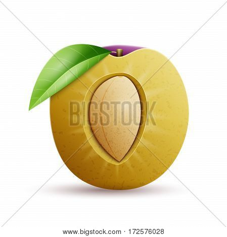 Half Plums vector icon. Plums vector object isolated on white background. Fresh and juicy fruit.