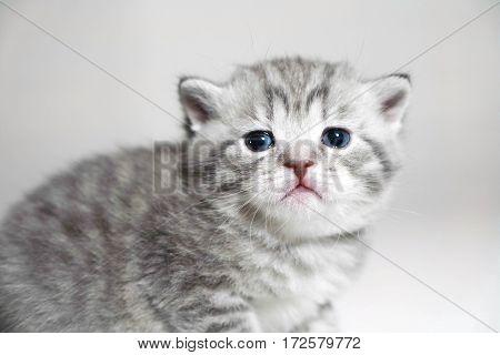 muzzle kitten striped baby portrait katty baby