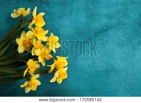 Amazing grunge background with Yellow flowers daffodils on turquoise texture. Beautiful Colorful Greeting Card for Mothers Day Birthday March 8. Top view Flat lay. Horizontal Image With Copy Space