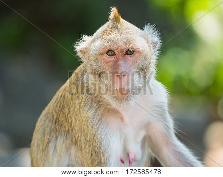 mother monkey lives in a natural park