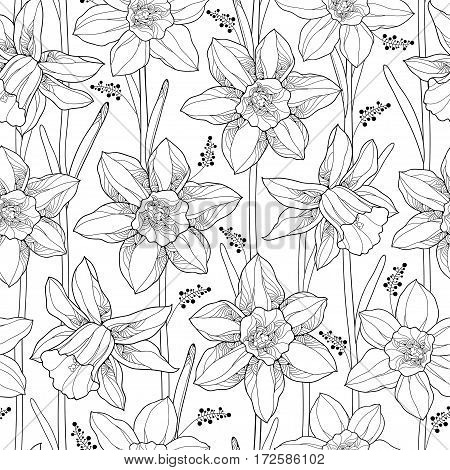 Vector seamless pattern with outline narcissus or daffodil flower and leaves on the white background. Floral background with narcissus for spring design or adult coloring book in contour style.