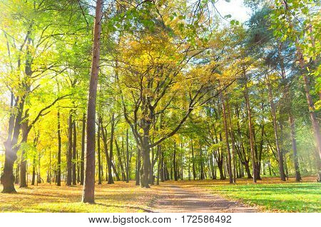 Idyllic Nature Forest View