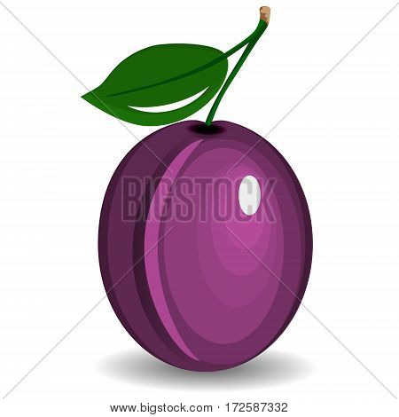 Composition of several plums. Purple vector plum fruits whole looking. Group of tasty fruits colorful design for the packaging of juice, breakfast, healthy eating, vegetarianism. Ripe whole plums