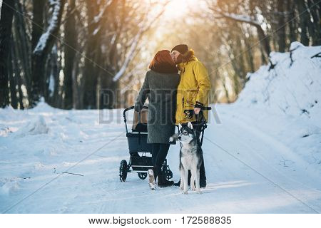 young family and a dog walking with a stroller in the winter forest