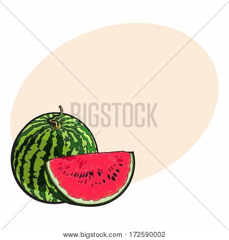 Whole striped watermelon with curled up tail and red slice with black seeds, sketch style vector illustration isolated with place for text. Realistic hand drawing of whole and cut ripe watermelon