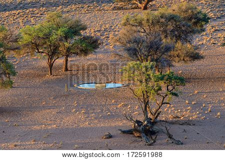 Artificial watering hole for animals among small acacia trees in Namib desert shown at sunset. Namibia