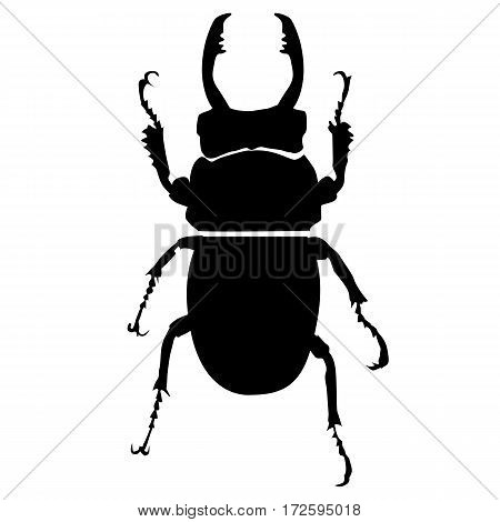 icon silhouette bug on white background. template vector illustration