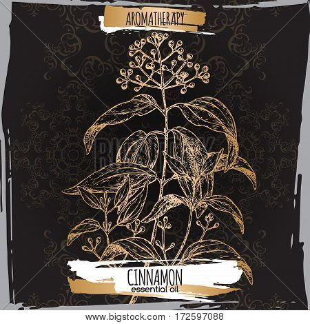 Cinnamomum verum aka cinnamon sketch on elegant black lace background. Aromatherapy series. Great for traditional medicine, perfume design, cooking or gardening.
