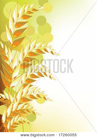 Golden wheat abstract